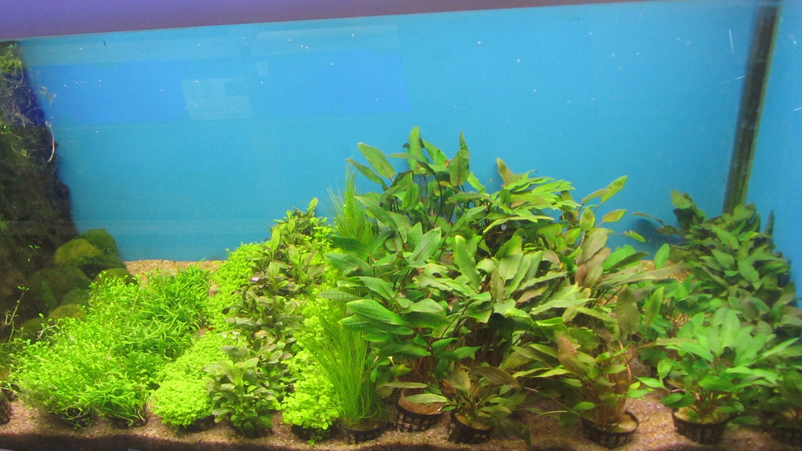 Plantepakke 2 består af 10 planter. høj, medium, lav