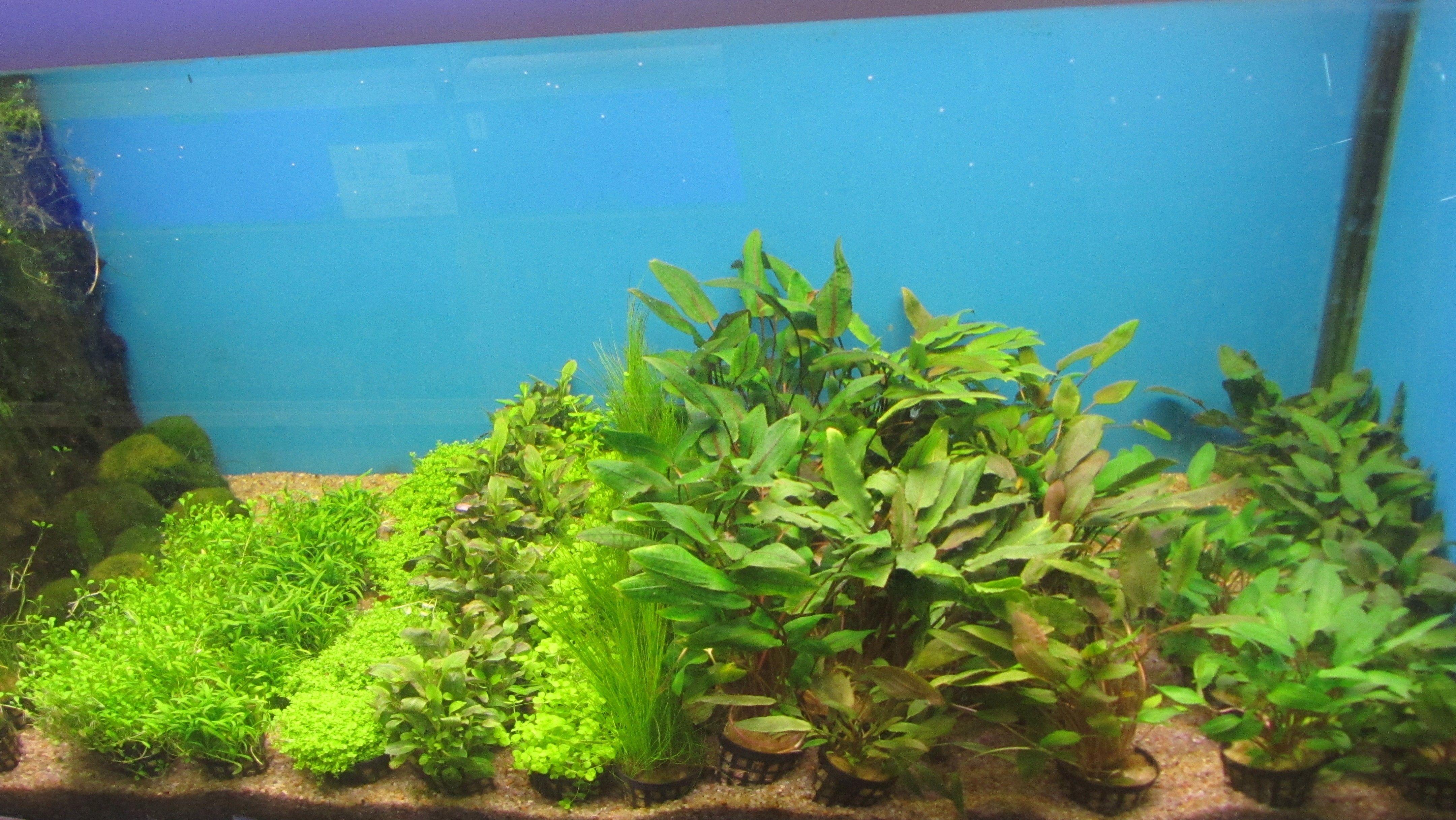 Plantepakke 9 består af 8 planter. høj, medium, Laboratoriedyrket + 1 mos