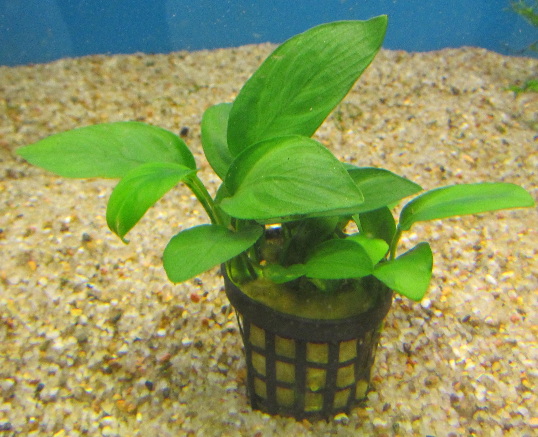 Plantepakke 10 Luxus består af 10 nemme planter. høj, medium, lav