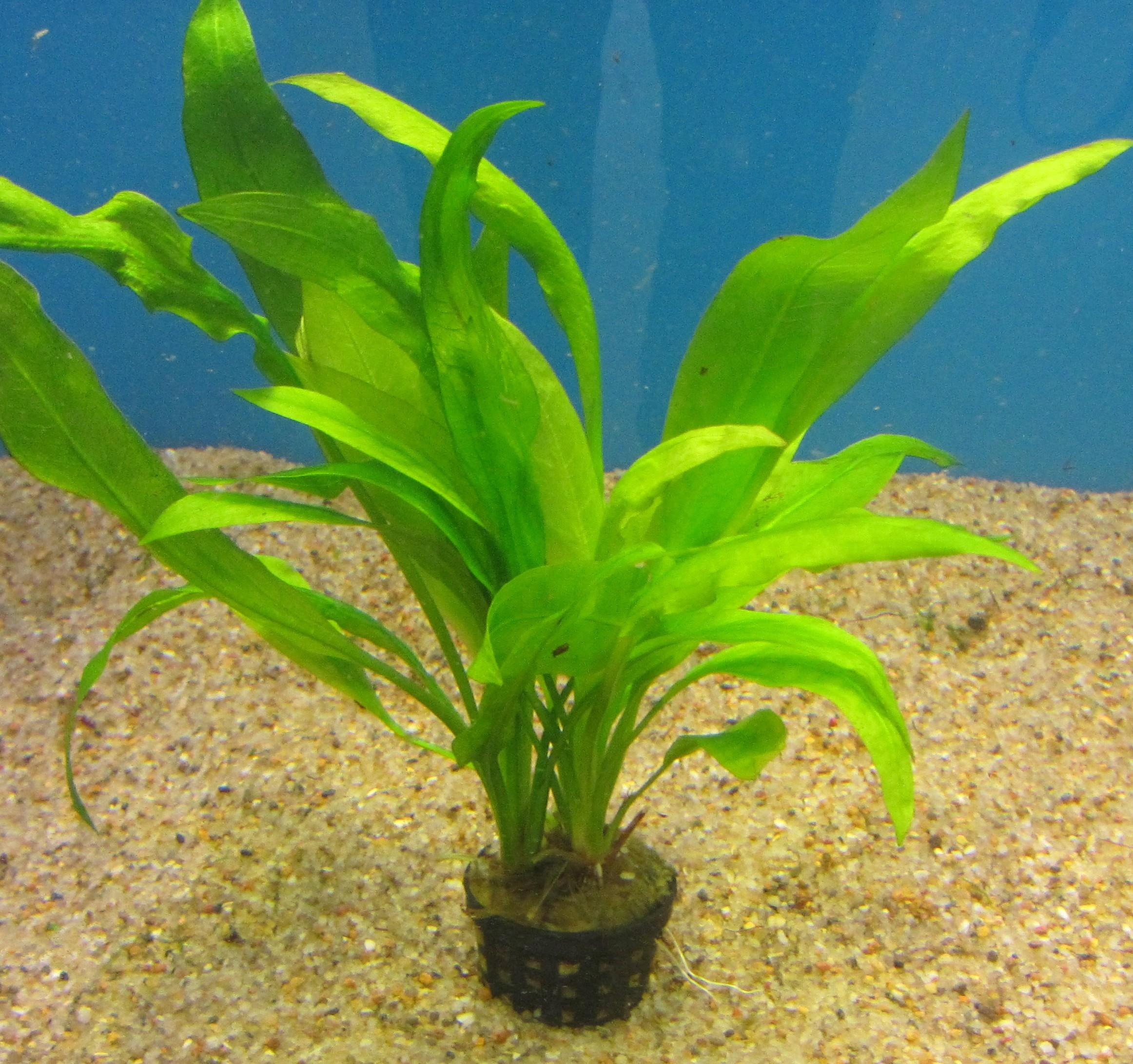Plantepakke 11 Luxus består af 5 nemme planter. høj, medium, lav