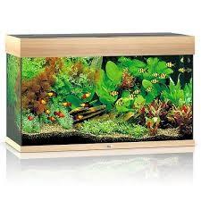 Juwel Rio Akvarie 125 liter Lyst træ med Ledlys