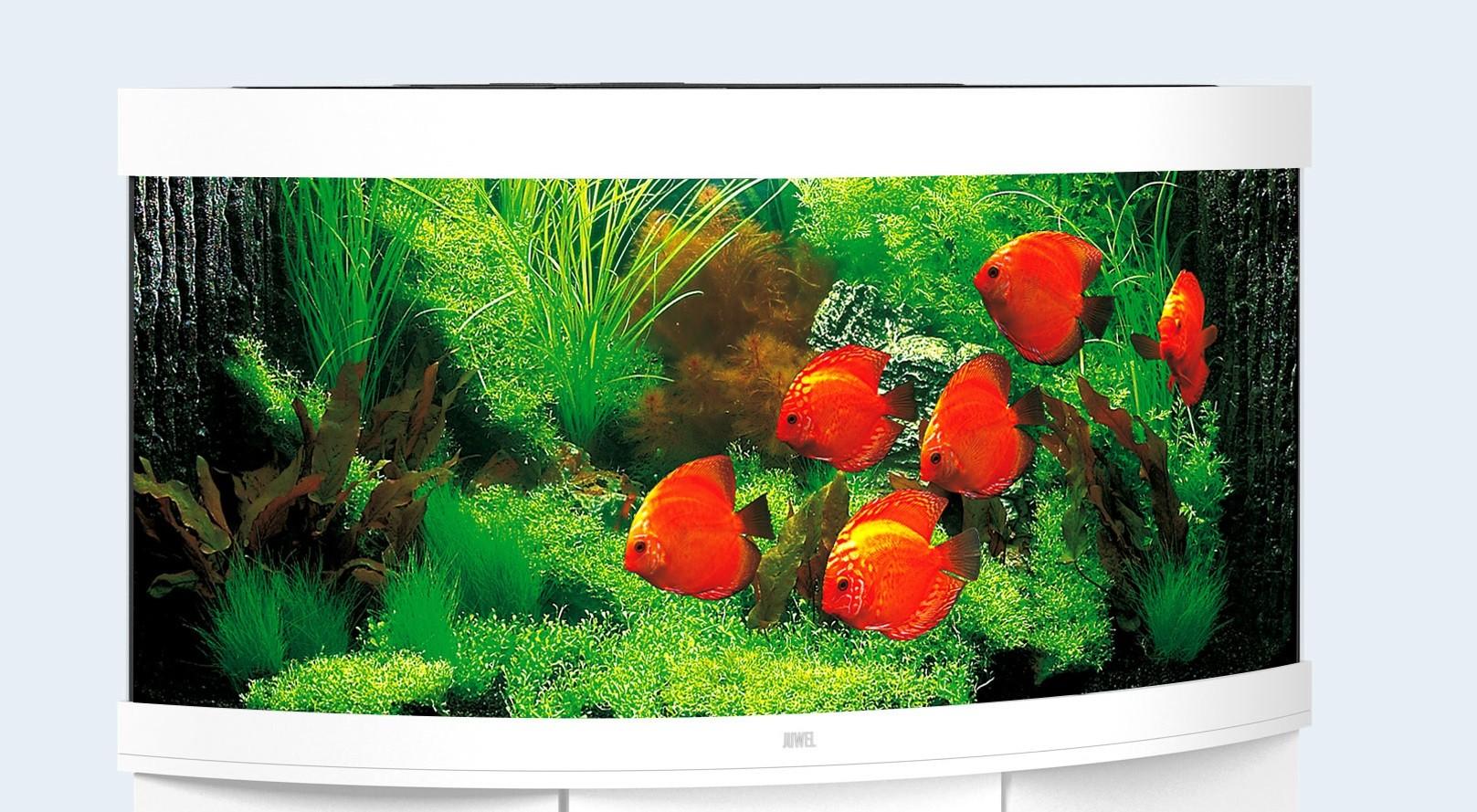 Juwel Trigon Akvarie 350 liter hvid med Ledlys