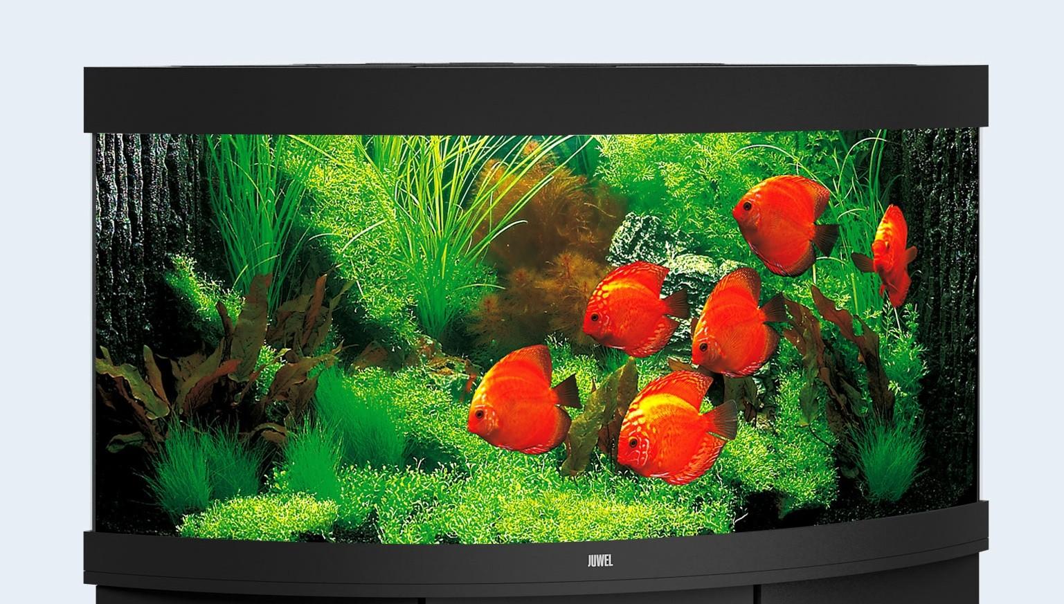 Juwel Trigon Akvarie 350 liter sort med Ledlys