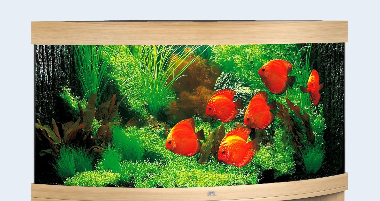 Juwel Trigon Akvarie 350 liter lyst træ med Ledlys
